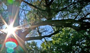 Banner sun through trees4
