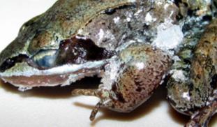 Banner frozenfrog